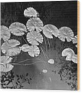 Lilly Pads Fakahtchee Strand Wood Print by Jim Dohms