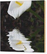 Lily Reflection Wood Print by Avalon Fine Art Photography