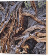 Limber Pine Roots Wood Print by Leland D Howard