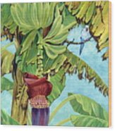 Little Blue Quaker Wood Print by Danielle  Perry