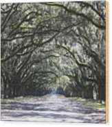 Live Oak Lane In Savannah Wood Print by Carol Groenen