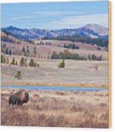 Lone Bull Buffalo Wood Print by Cindy Singleton