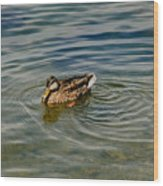 Lone Duck Swimming On A River Wood Print by Todd Gipstein