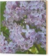 Lovely Lilacs Wood Print by Anna Villarreal Garbis