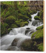 Lush Stream Wood Print by Mike Reid