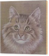 Maine Coon Cat Wood Print by Dorothy Coatsworth