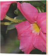 Mandevilla Wood Print by Patrick  Short