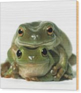 Mating Frogs Wood Print by Darwin Wiggett