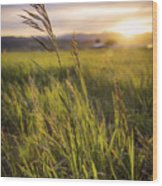 Meadow Light Wood Print by Chad Dutson