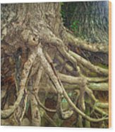 Medusa Wood Print by Cricket Hackmann
