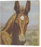 Molly Mule Foal Wood Print by Dorothy Coatsworth