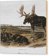 Moose Deer (cervus Alces) Wood Print by Granger