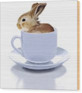 Morning Bunny Wood Print by Bob Nolin