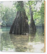 Morrison Springs Wood Print by Lori Ceier