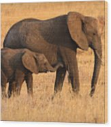 Mother And Baby Elephants Wood Print by Adam Romanowicz