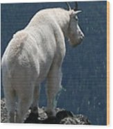 Mountain Goat 2 Wood Print by Sean Griffin
