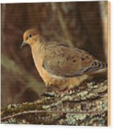 Mourning Dove At Dusk Wood Print by Amy Tyler
