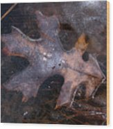 Oak Preservation Wood Print by Adam Long