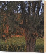 Oak Tree And Vineyards In Knight's Valley Wood Print by Charlene Mitchell