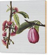 Ohiaai Wood Print by Hawaiian Legacy Archive - Printscapes