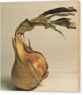 Onion Wood Print by Bernard Jaubert