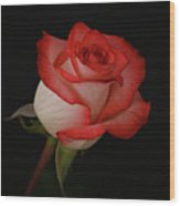 Orange And White Rose Wood Print by Sandy Keeton