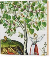 Ovids Pyramus And Thisbe Myth Wood Print by Photo Researchers