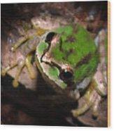 Pacific Tree Frog Wood Print by Nick Gustafson