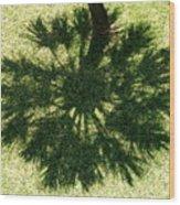 Palm Shadow Wood Print by Richard Mansfield