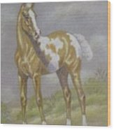 Palomino Paint Foal Wood Print by Dorothy Coatsworth
