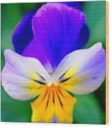 Pansy Wood Print by Kathleen Struckle