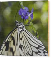 Paper Kite Butterfly Wood Print by Heather Applegate