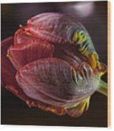 Parrot Tulip 4 Wood Print by Robert Ullmann