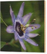 Passiflora Wood Print by Mike Reid
