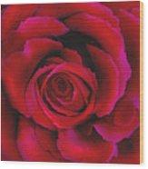 Perfect Rose Wood Print by Joel Payne