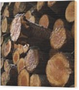 Pine Trees Wood Print by Bernard Jaubert
