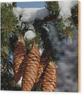 Pinecones Hanging From A Snow-covered Fir Tree Branch Wood Print by Sami Sarkis