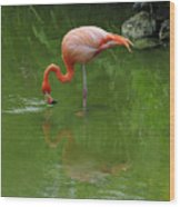 Pink Flamingo Wood Print by Cindy Lee Longhini