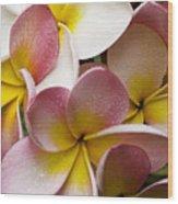 Pink Frangipani Wood Print by Avalon Fine Art Photography
