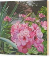 Pink Geraniums Wood Print by Lea Novak