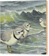 Piping Plovers At The Shore Wood Print by Tara Milliken