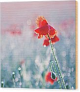 Poppy Field In Flower With Morning Dew Drops Wood Print by Sophie Goldsworthy