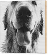 Portrait Of A Happy Dog Wood Print by Osvaldo Hamer