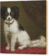 Portrait Of A Spaniel Wood Print by Anonymous