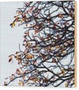 Praha Tangled Tree Wood Print by Shawn Wallwork