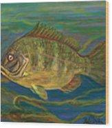 Predatory Fish Wood Print by Anna Folkartanna Maciejewska-Dyba