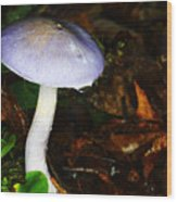 Purple Mushroom Russula Cyanoxantha Wood Print by Andrew Pacheco