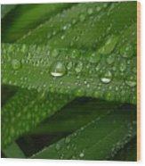 Raindrops On Green Leaves Wood Print by Carol Groenen