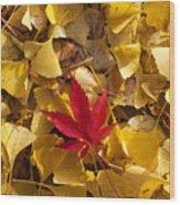 Red Autumn Leaf Wood Print by Garry Gay