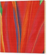 Red Petals Wood Print by Lucy Arnold